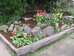 gardening-edging-after