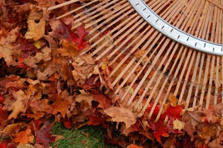 raking-leaves-snohomish